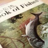 サカナクションの魚図鑑特典のブックレットが面白かった