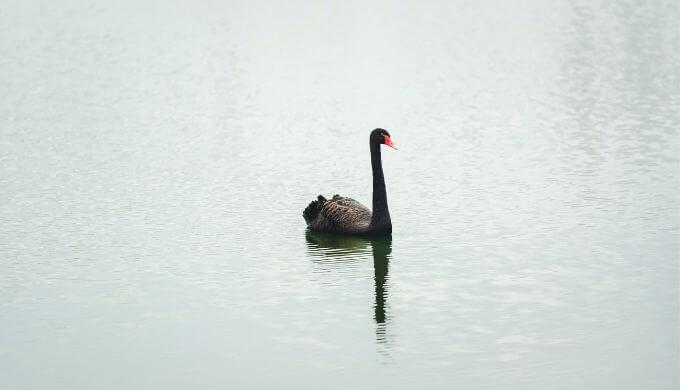 進撃の巨人3期の曲「Red Swan」「暁の鎮魂歌(リンホラ)」歌詞の意味を解釈考察