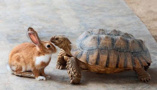 【RHYMESTER(ライムスター)】「K.U.F.U.」の歌詞考察「ウサギになれないカメの戦い方」