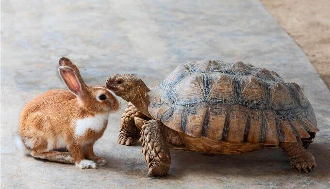 【RHYMESTER(ライムスター)】「K.U.F.U.」の歌詞に学ぶ「ウサギになれないカメの戦い方」
